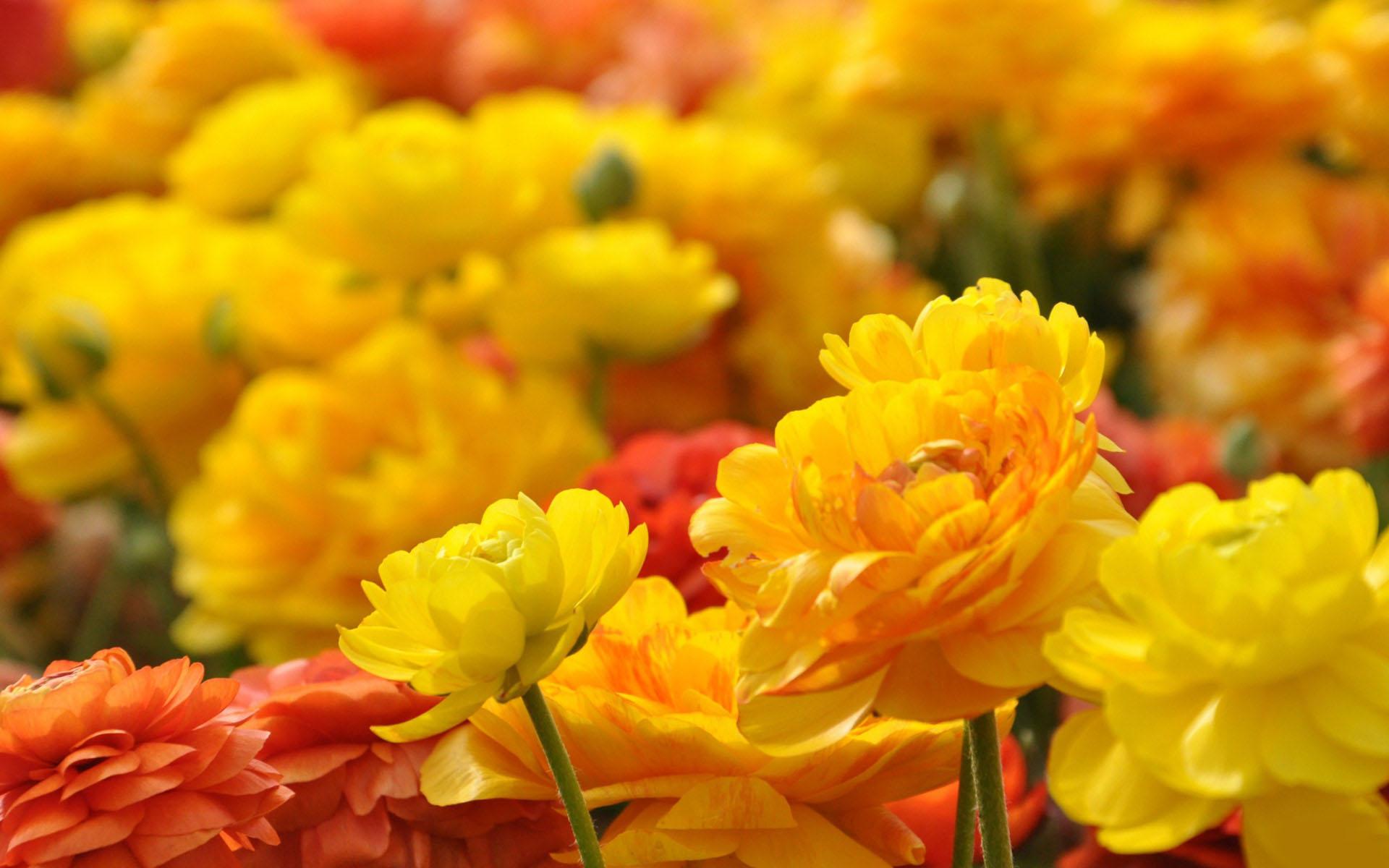 12-flower-wallpaper.