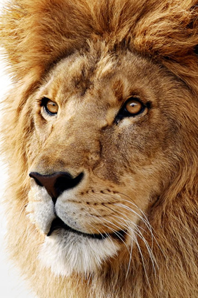 OSx-Lion-iPhone-Wallpaper-2.