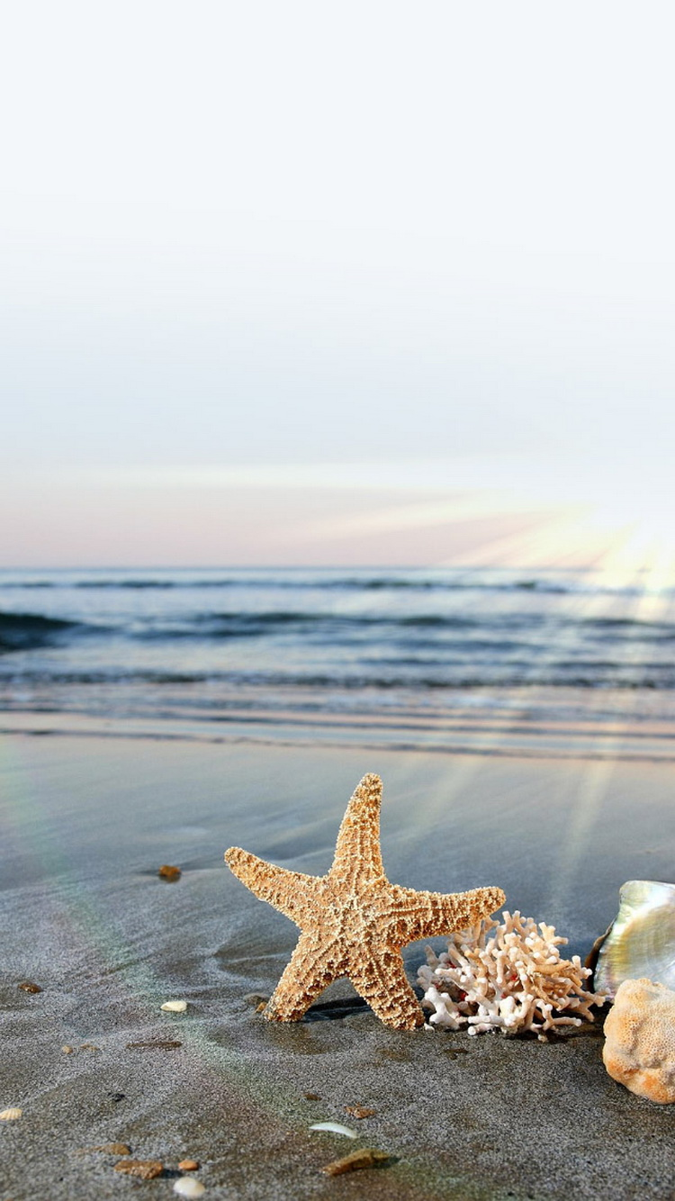 Starfish-Sun-Waves-Beach-iPhone-6-Wallpaper.