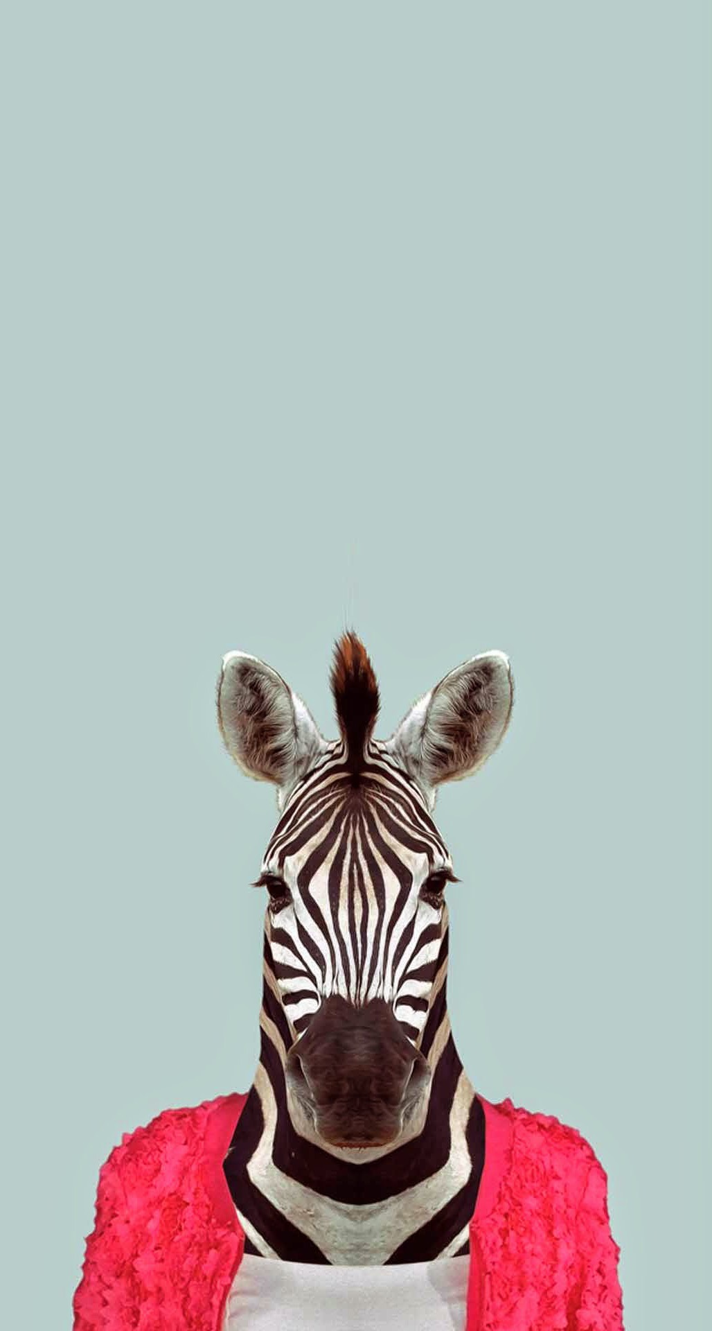 Zebra-Funny-Animal-Portrait-iPhone-6-Plus-HD-Wallpaper.