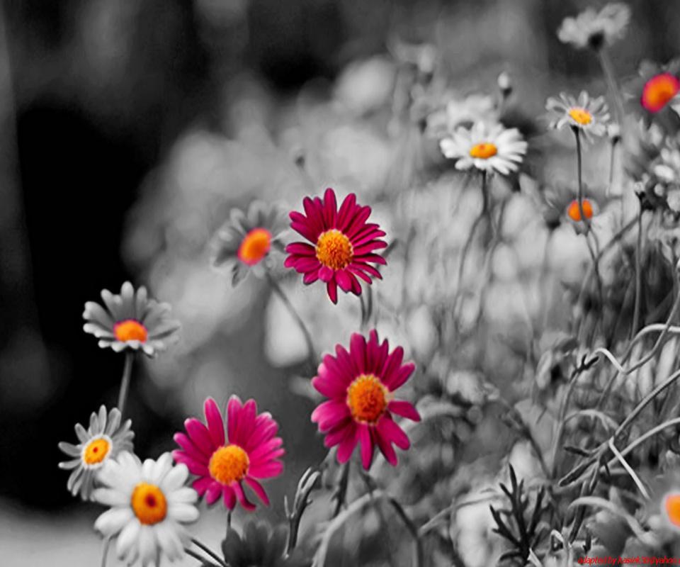flowerv wallpaper