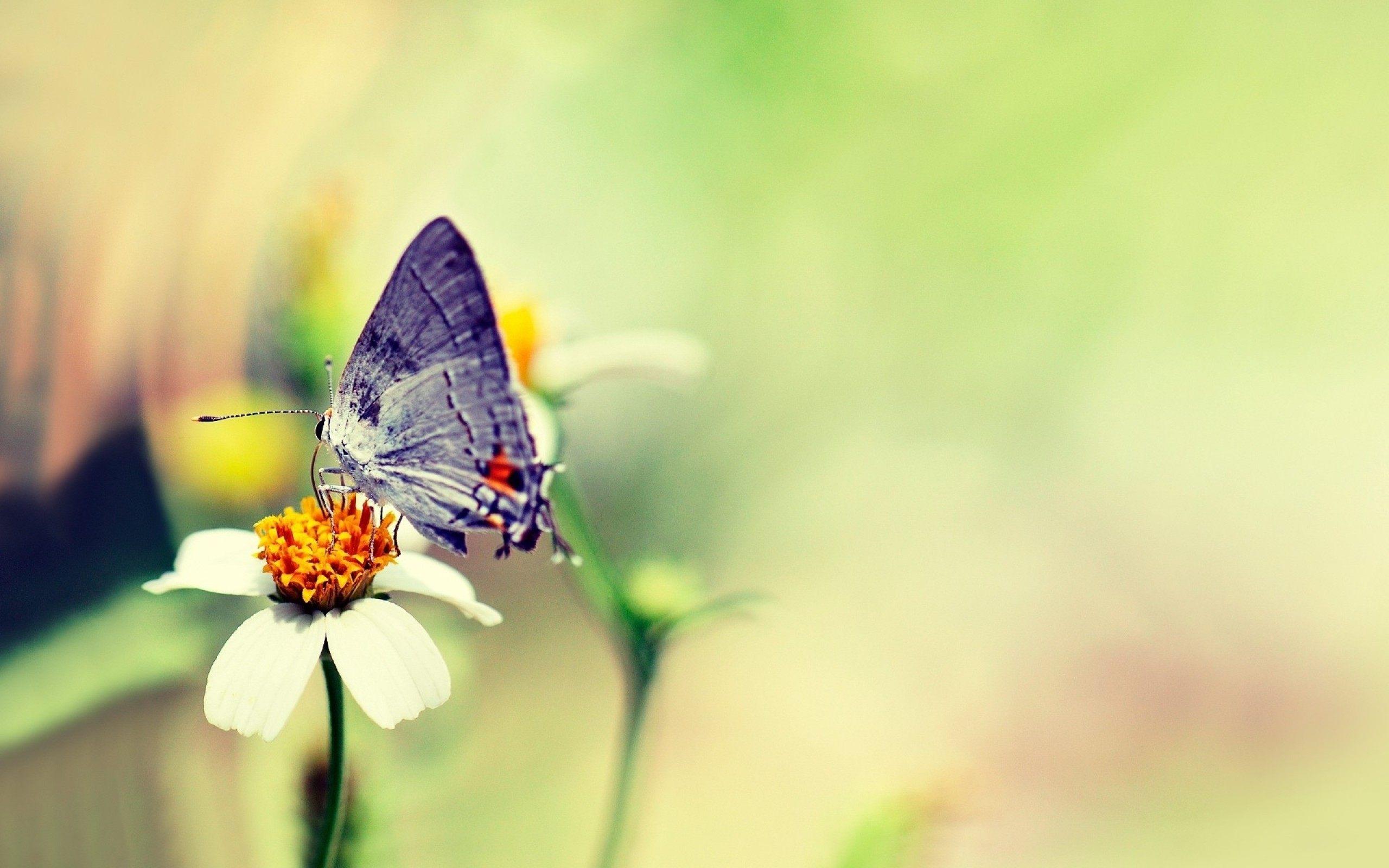 Butterfly-On-Flower-Wallpaper.